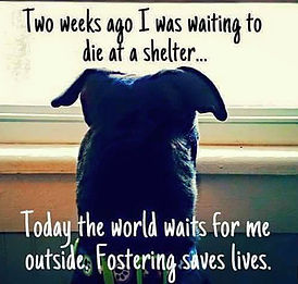 fostering_01